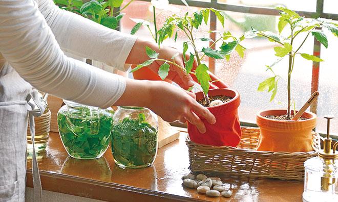 家庭菜園初心者はプランターがおすすめ!野菜のプロ直伝3つのポイント