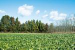 注目の新野菜「アレッタ」も栽培!三重県伊賀ベジタブルファーム