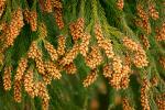 「花粉症にきくツボ」つらい花粉症にお悩みの方必読!東洋医学で花粉症対策
