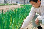 伝統野菜・在来種を育てる生産者!群馬県、利根川みどりの会