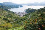 愛媛県無茶々園(むちゃちゃえん)の温州みかん