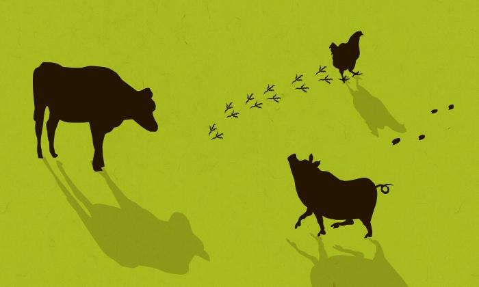 アニマルウェルフェアとは。BSEで見えた家畜にとってのいい環境。