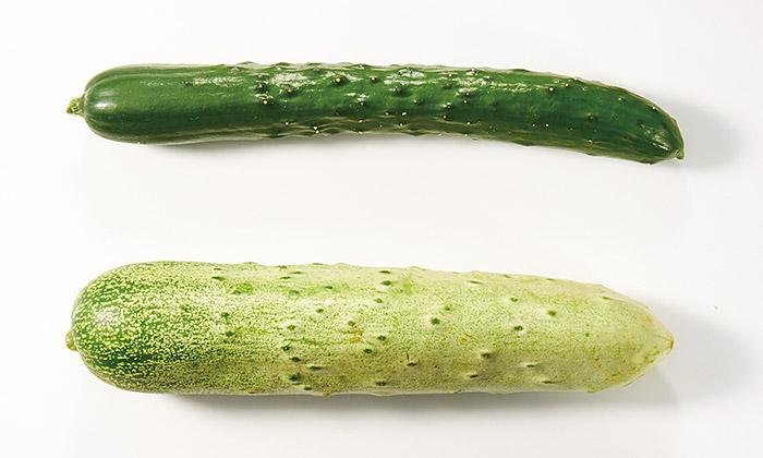 【楽しくておいしい珍しい野菜】群馬県高山村の「高山きゅうり」