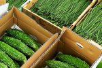 【楽しくておいしい珍しい野菜】紫三尺ささげ(むらさきさんじゃく)とは