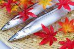 【作り置きレシピ】秋に旬を迎えるサンマの常備菜おすすめ3選