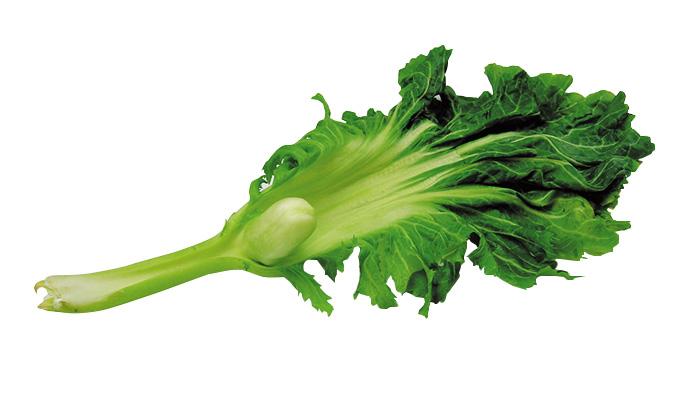【珍しくておいしい野菜】「雲仙こぶ高菜」とは