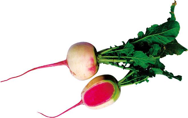 【珍しくておいしい野菜】「紅芯大根(こうしんだいこん)」とは