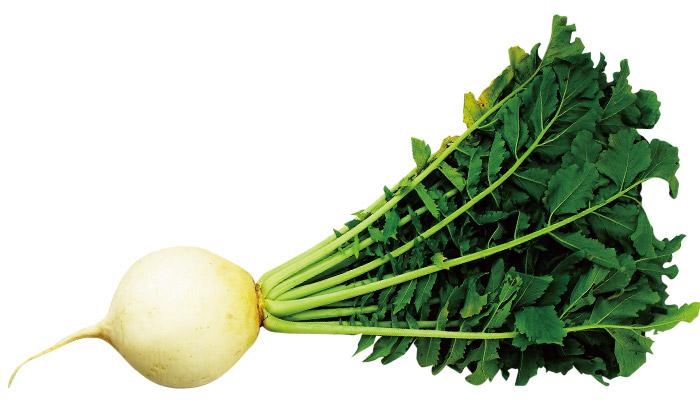 【珍しくておいしい野菜】「聖護院大根(しょうごいんだいこん)」とは