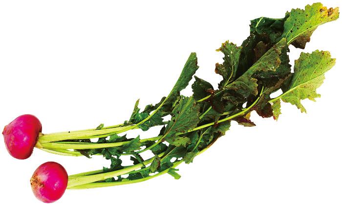 【珍しくておいしい野菜】西洋種のかぶ「長崎赤かぶ」とは