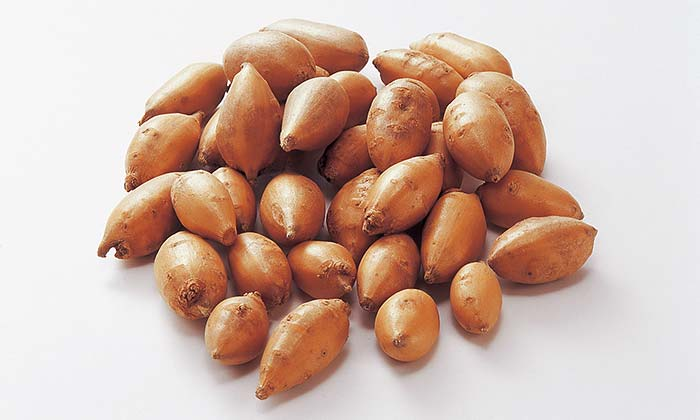 【珍しくておいしい野菜】貴重な栄養食「アピオス(ホドイモ)」とは