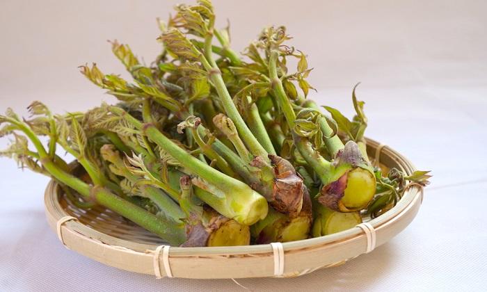 山菜の王様「たらの芽」の美味しい旬の時期と栄養を紹介!