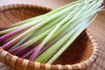 春野菜「ふき」の旬はいつ?栄養素とおすすめの食べ方