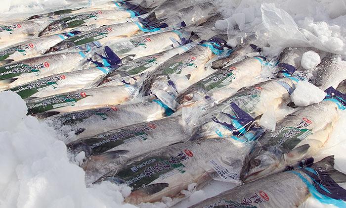 持続可能な魚の食べ方「佐藤水産」「明神水産」「松本養鰻」「マルト水産」の現場