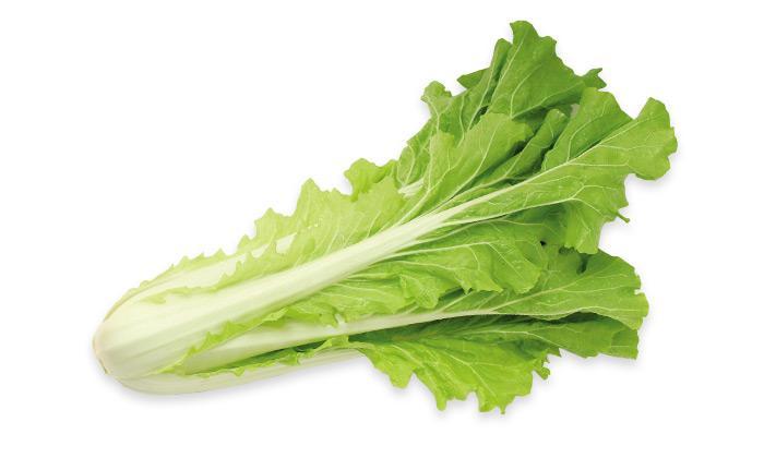 【珍しくておいしい野菜】野菜炒めや鍋物にも使える「大型山東菜」