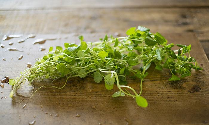春が旬の野菜「クレソン」!豊富な栄養素とおすすめレシピをご紹介