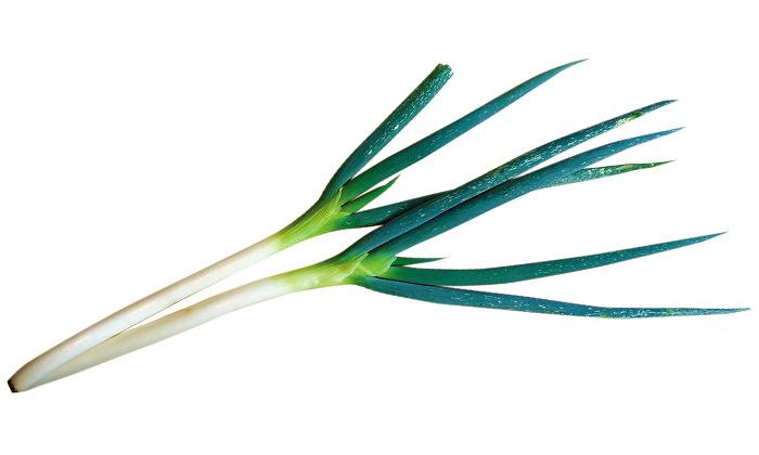 【珍しくておいしい野菜】葉がやわらかい「潮止晩ねぎ」