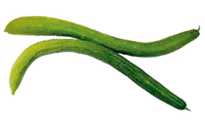 【珍しくておいしい野菜】浅漬けがおいしい「大和三尺(やまとさんじゃく)きゅうり」
