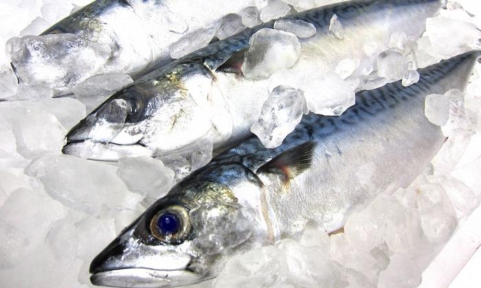 タラやブリは冬が旬!脂の乗った魚を堪能しよう