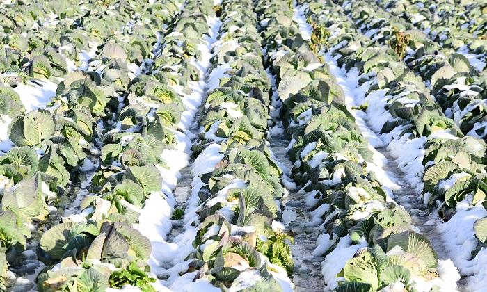 冬が旬な野菜を食べよう!冬野菜の種類と特徴